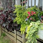 More of their lush plants, this was a great year for flowering plants, prior to the drought that