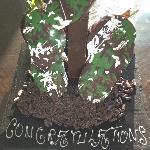 Chocolate covered strawberry gift