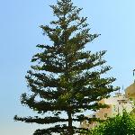 дерево в отеле