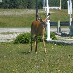 Deer and other wildlife are regularly seen