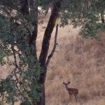 A buck we saw on our hike
