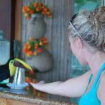 Feeding a wild toucan!