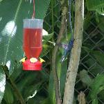 Hummingbird Garden in the rear garden...