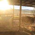 Dusk - animal feeding