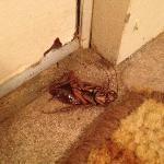 Kakerlake im Zimmer