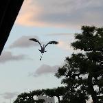Higashi Honganji crane