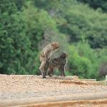 Monkey Park in Arashiyama
