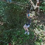 Ziplining high above the forest floor