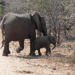 Elephants spotted in Kruger