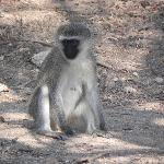 On a game drive in Kruger