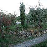 Devant l'appartement, le terrain et ses nombreux oliviers