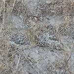 Baby leopard we discovered while off-roading in Sabi