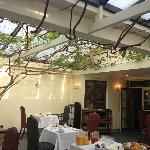 The vine in the splendid restaurant.