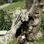 tronco cavo