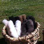 wool for spinning