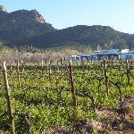 view across the vineyard