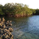 Black Coast ( coral)