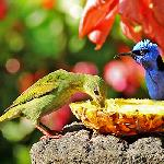 Enjoy breakfast with the birds!
