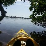 Peeking out of the mangroves