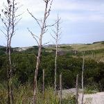 More Wilderness