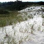 Sand Dunes towards Beach Area 2