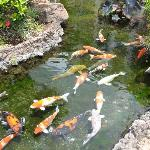 There are tons of koi fish that you can feed.