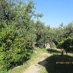 Blick in den Olivenhain