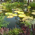 Stagno con piante acquatiche