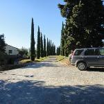 Driveway to la Sovana - fabulous pencil pines.