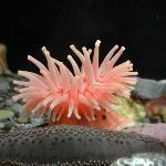 Centre d'interprétation avec jolis aquariums