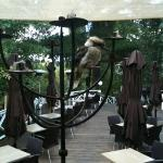 kookaburras are frequent visitors to the deck outside.