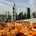 Bees on top of Jumeirah Frankfurt