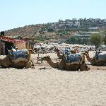 Kamel beach - cammelli