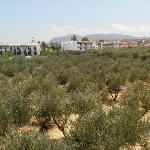 Olive groves all around hotel