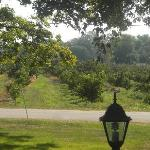 orchards across the street - view from porch