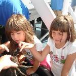Intéressants les crabes