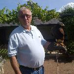 Dad with the Harris Hawk