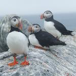 Go on a Puffin Cruise!