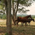 horses ranging on Frankie's large acreage