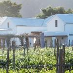 View of the Property from the vineyard