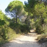 Forest path to quiet beaches from Magda