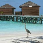 Jacuzzi water villas with our friendly heron