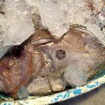Dülger (John Dory Fish)