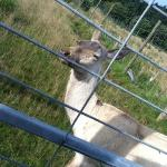 white deer at the park