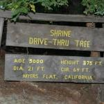 Shrine Drive Thru Tree