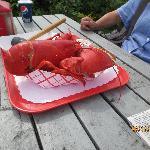 3.75 # lobster