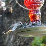 Humming bird enjoying the nectar in the garden