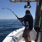 Shark fishing for research tagging with St. Andrews Sport Fishing Co.