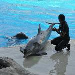 Addestratrice con delfini