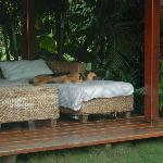 Resident dog relaxing on a covered area by the pool